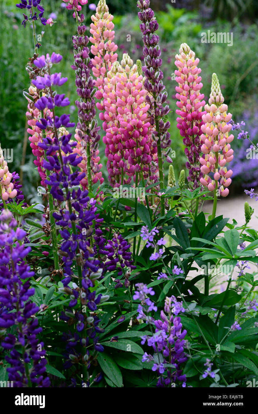 Perennials That Have Purple Flowers