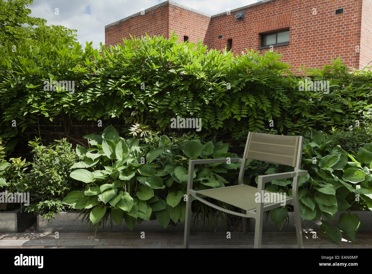 Quiet Corner Of Apartment Terrace Garden In Farringdon, London, UK With  Wisteria And Hosta Growing In Steel Planters Partially Screen The Terrace
