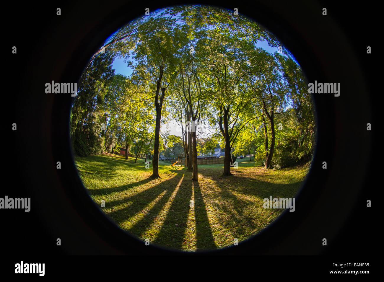 early morning sun shining through trees in backyard fisheye lens