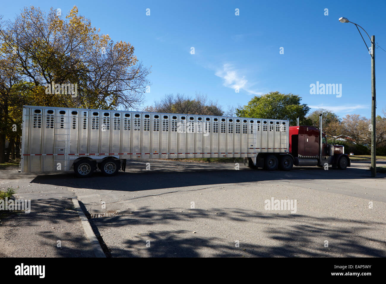 semi truck towing livestock trailer bengough saskatchewan canada stock photo royalty free image. Black Bedroom Furniture Sets. Home Design Ideas