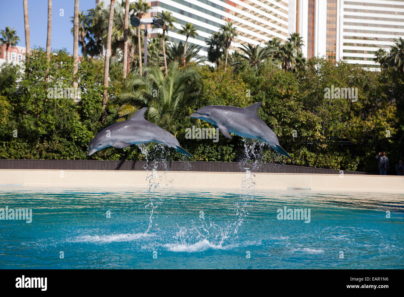Siegfried And Roy 39 S Secret Garden And Dolphin Habitat At Mirage Stock Photo Royalty Free Image