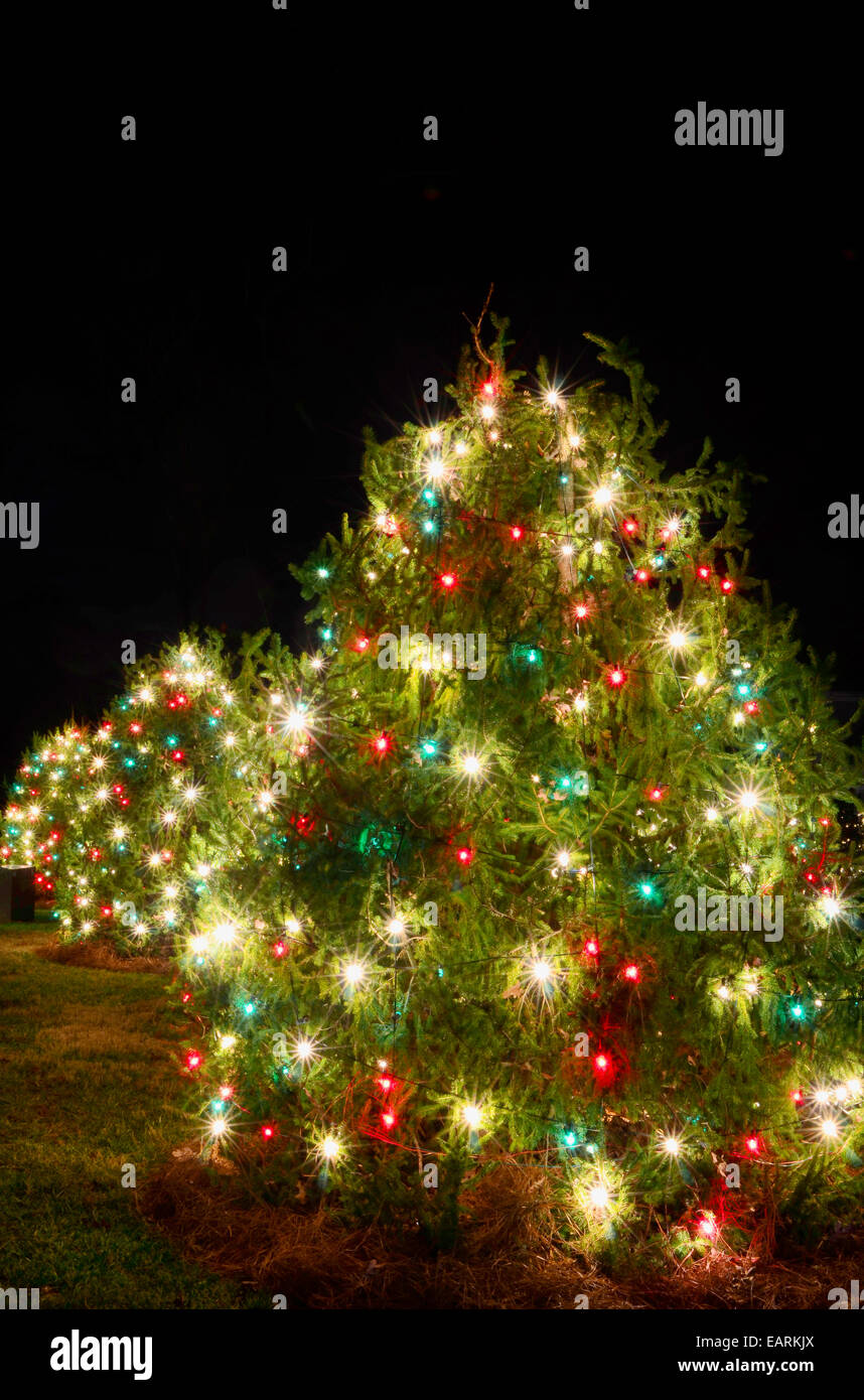 Outdoor Christmas Trees Have Been Decorated With Red, Green And White Lights  And Shot Against