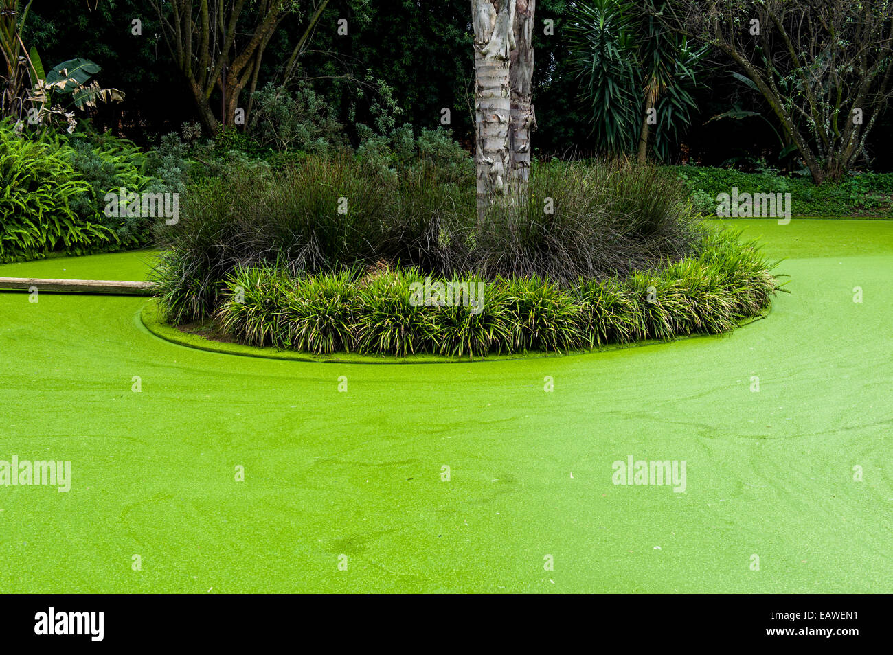 Aquatic Plants And Algae Cover The Water Surface Of A