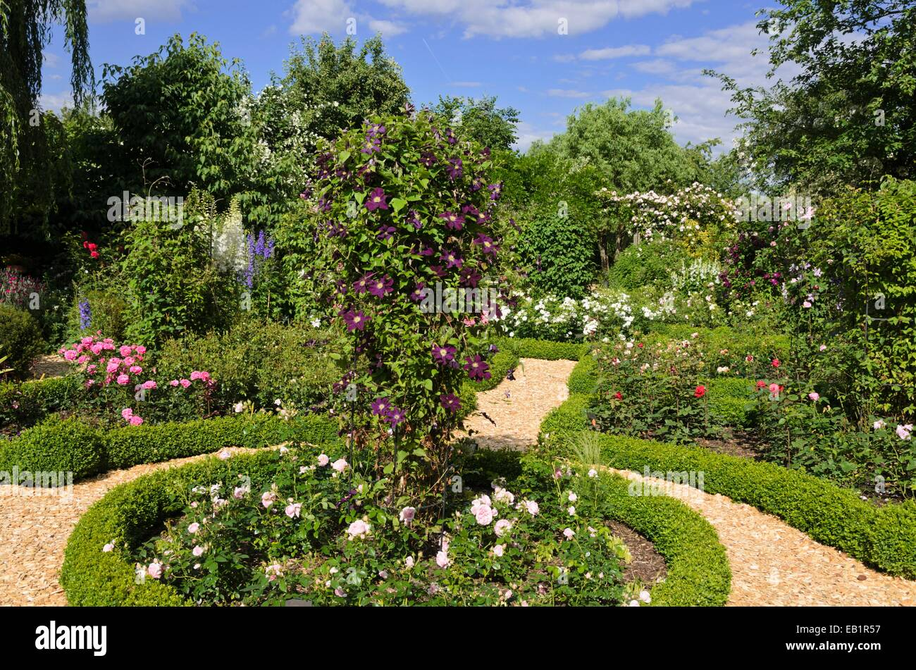 Clematis (Clematis) And Roses (Rosa) In A Rose Garden. Design: