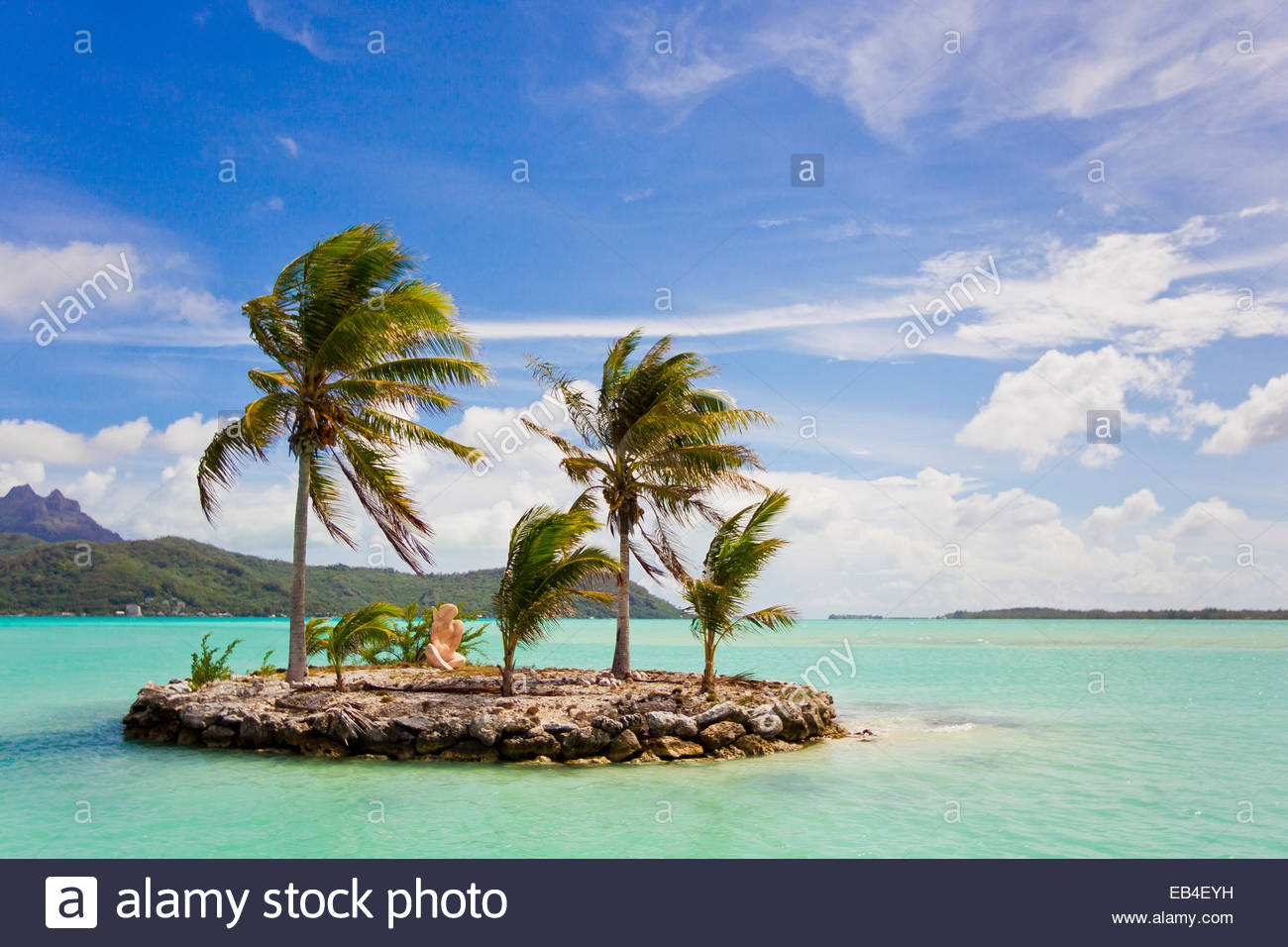 Hawaii Island Palm Society