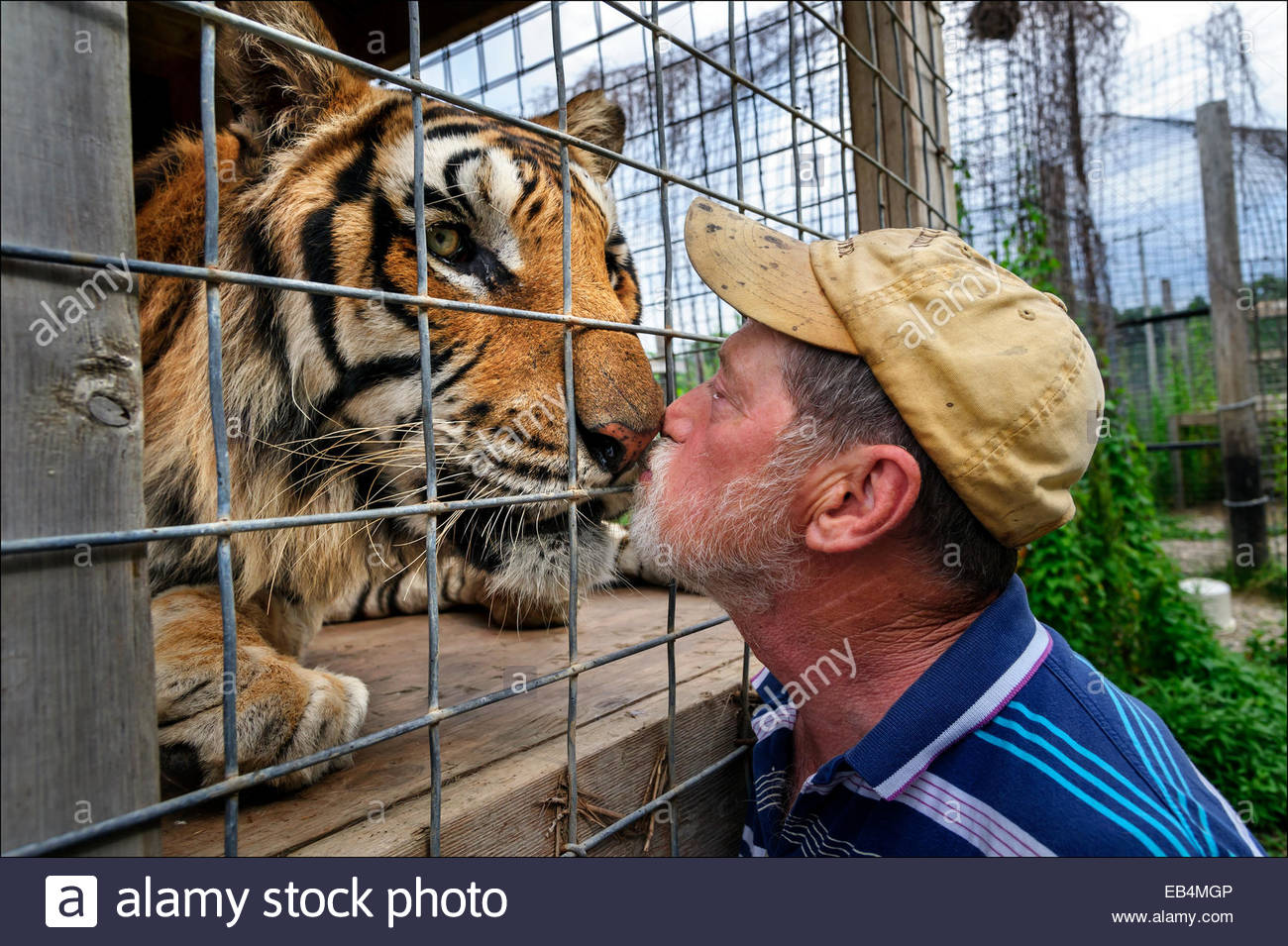 Nose to nose Exotic Feline Rescue Center owner Joe Taft greets a