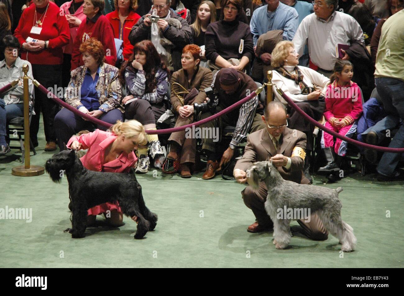 Dog Show In Madison Square Garden Garden Ftempo