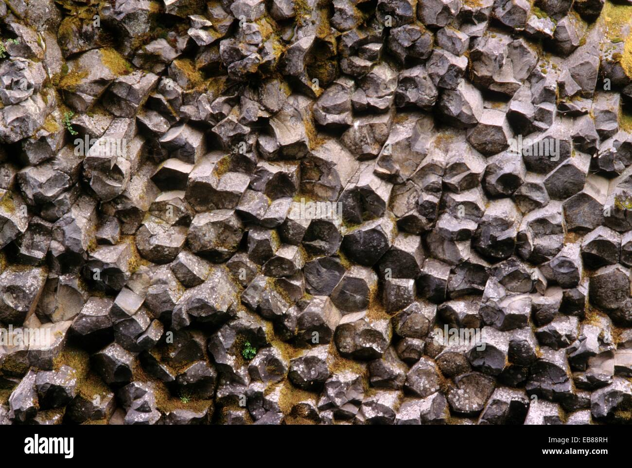 Basalt Stone Umpqua National Forest : Basalt columns on north umpqua trail near tokatee lake