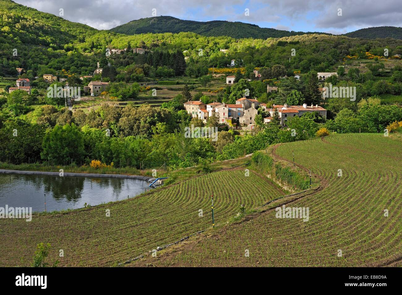 Terrace cultivation of sweet onion from cevennes hamlet of for Terrace cultivation