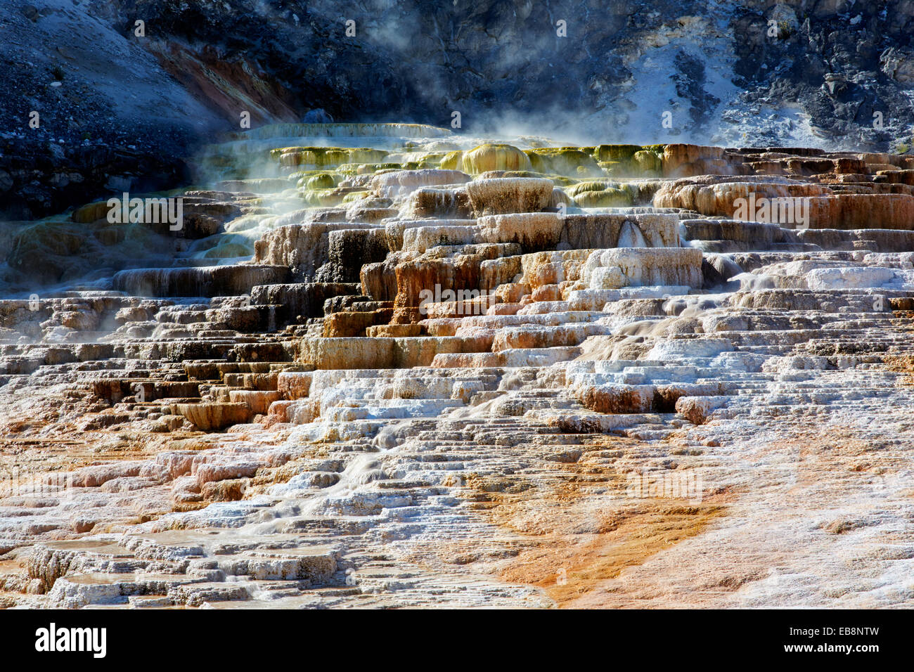 Minerva terrace mammot hot spring yellowstone national for Minerva terrace yellowstone