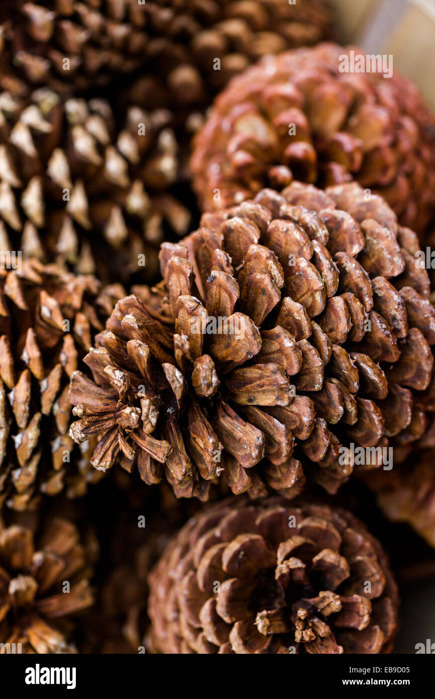 Pile of large pine cones in basket stock photo royalty for Large pine cones