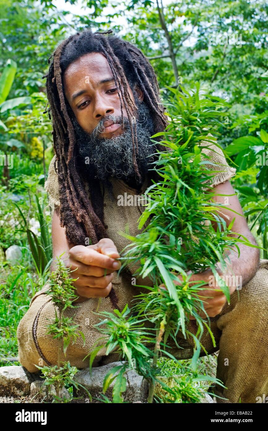 rastafarian village montego bay jamaica west indies