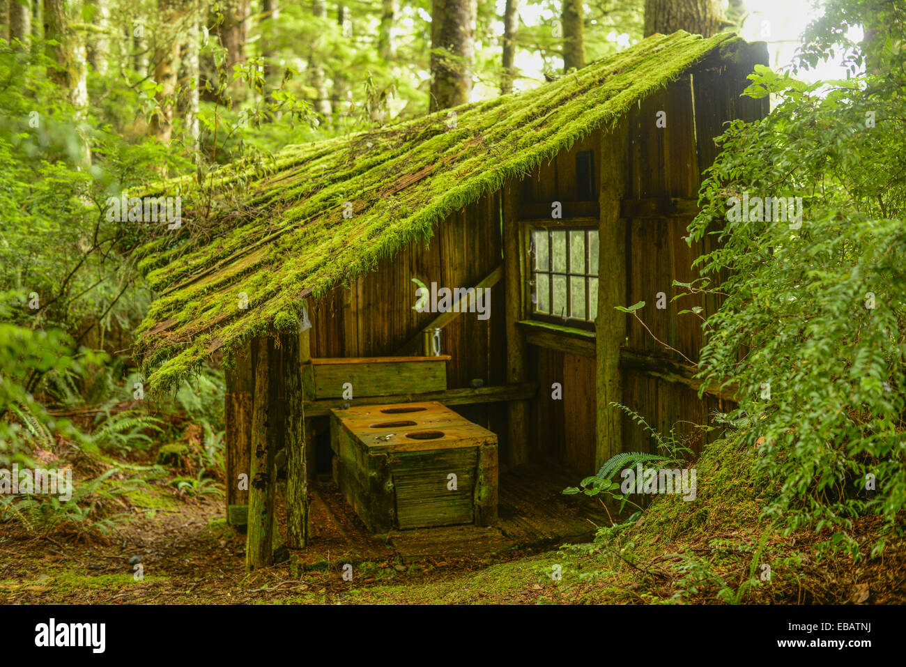 outdoor toilet hesquiat peninsula vancouver island bc canada stock image - Garden Sheds Vancouver Island