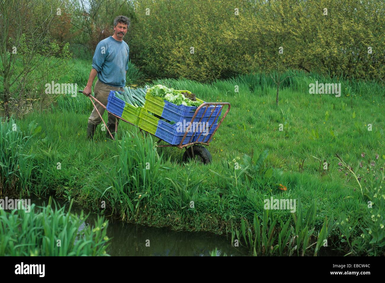 Market Gardening Producer In Organic Farming Hortillonnages Amiens Somme  Department Picardy Region France Europe