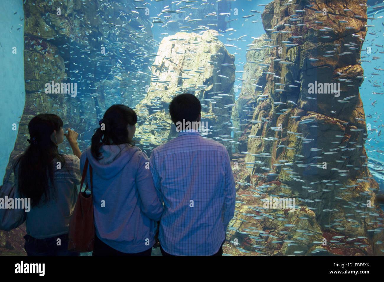 Fish aquarium japan - People Watching Fish At Osaka Aquarium Tempozan Osaka Kansai Japan