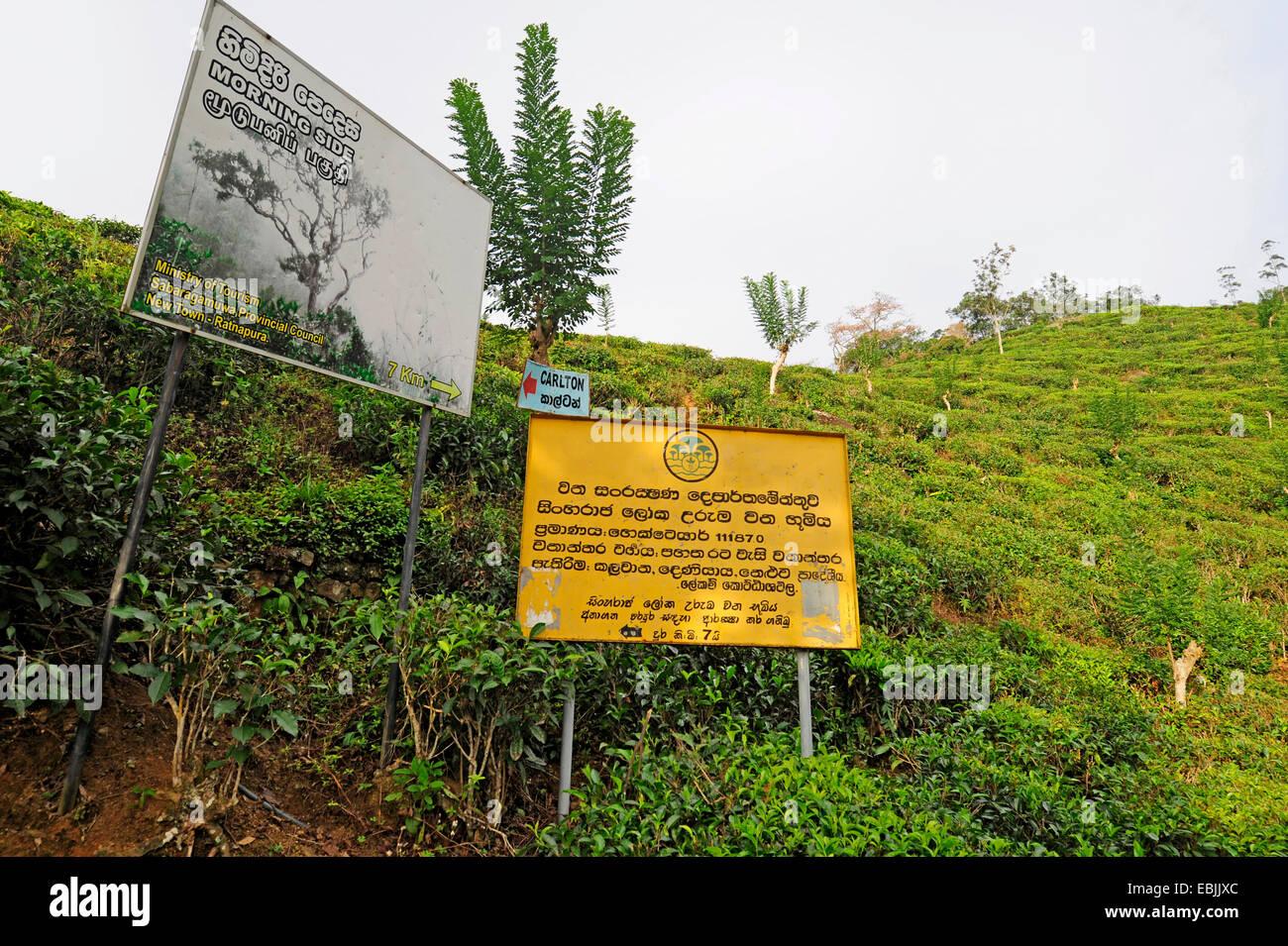 Sign in a tea plantation sri lanka morning side sinharaja forest national park