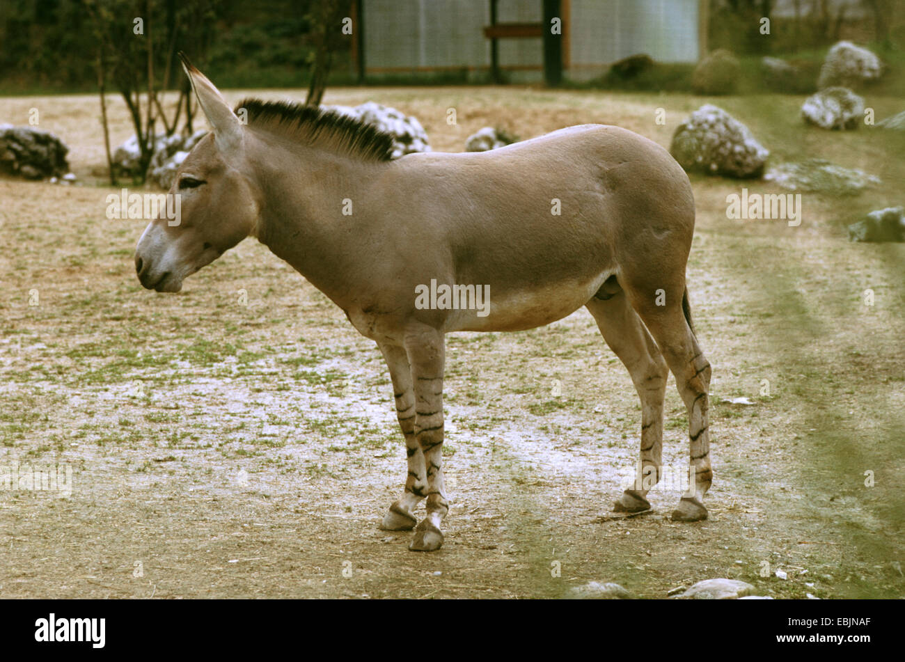 equus africanus asinus Wild ass (equus asinus africanus) however, the final rulemaking published on june 2, 1970, 35 fr  bio: skye sturgeon, daom (candidate) is the quality.
