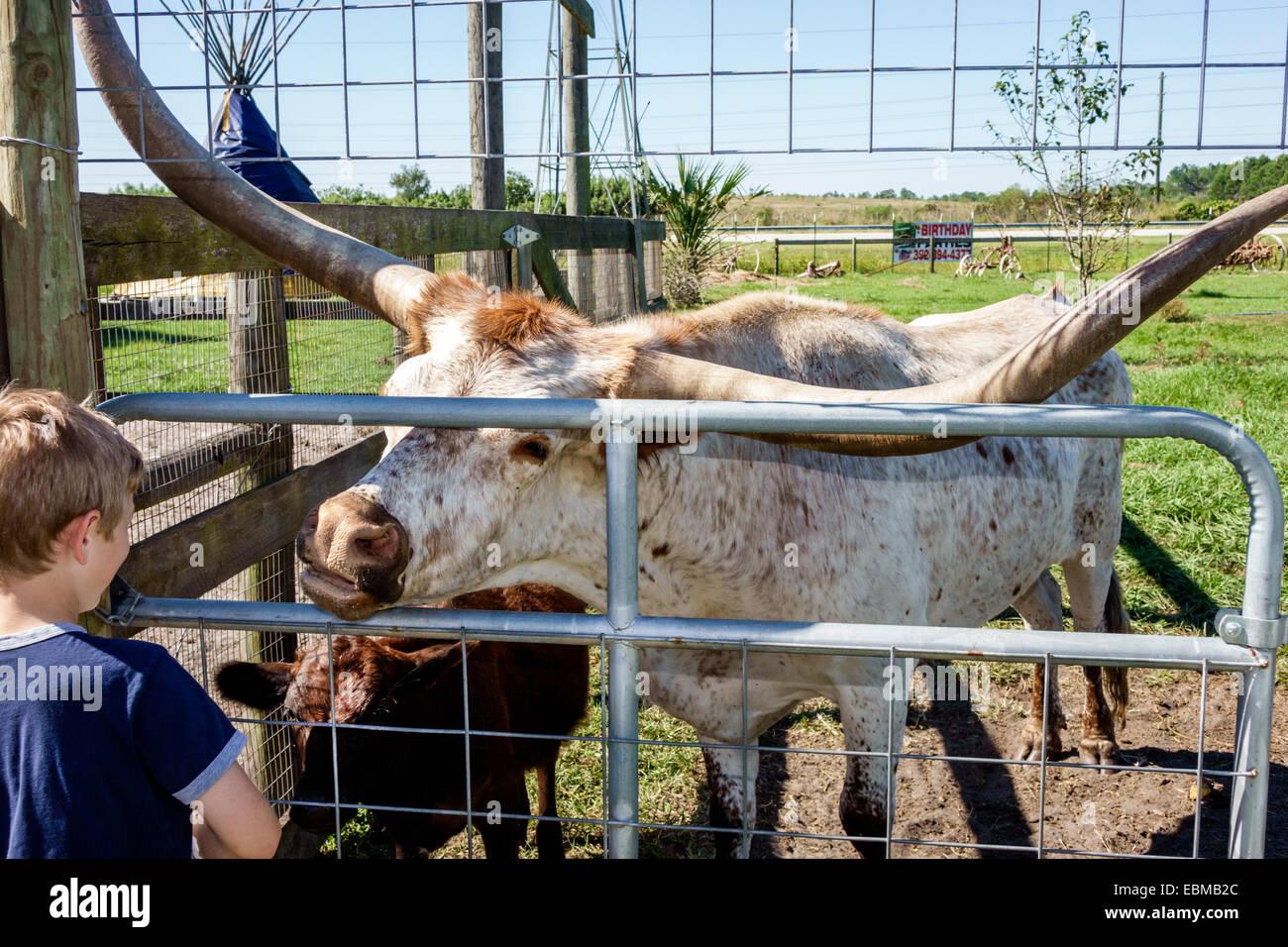 scene longhorn stock photos u0026 scene longhorn stock images alamy