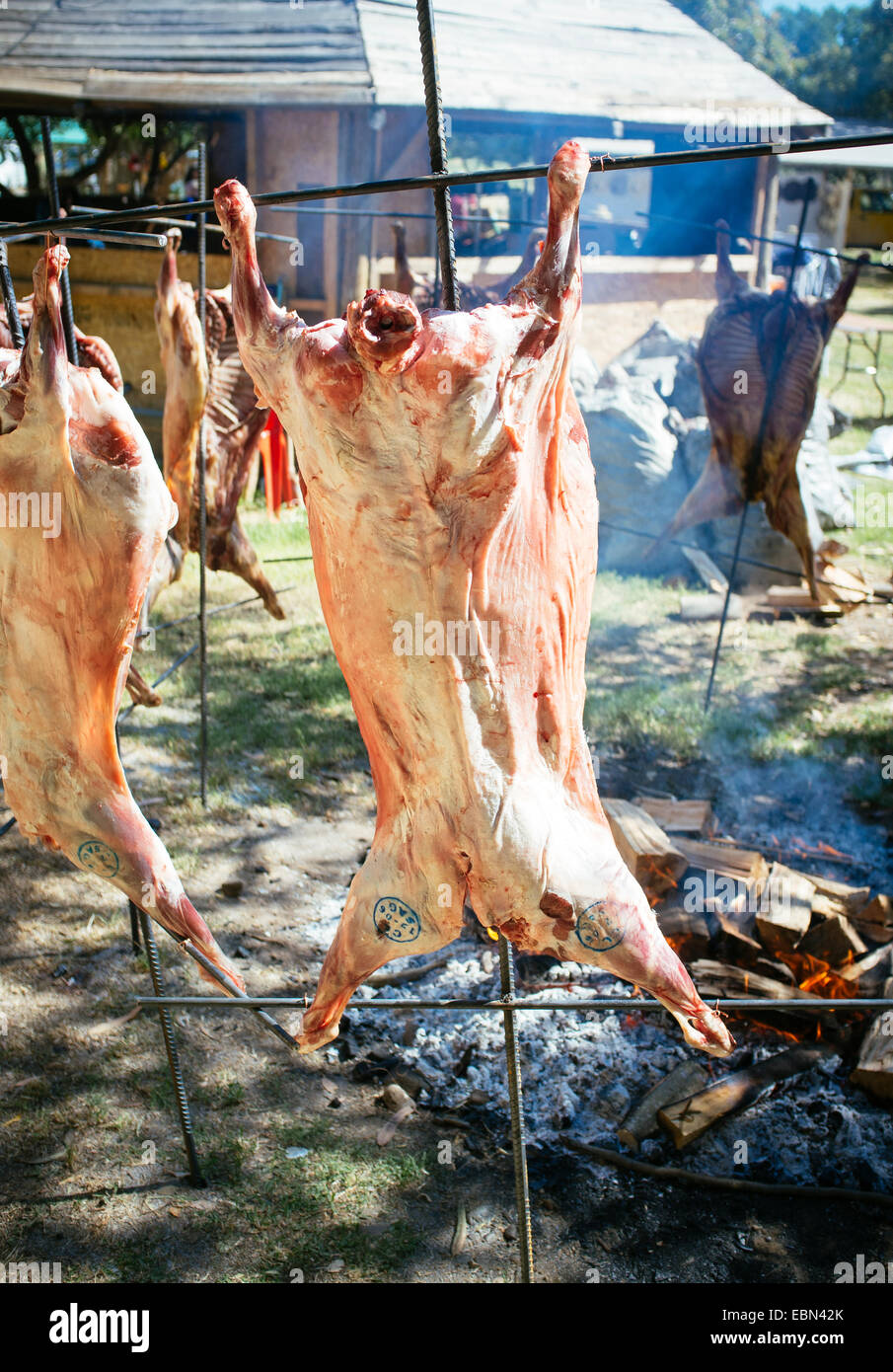whole lamb roasted on the grill Stock Photo, Royalty Free Image ... for Whole Lamb Grill  59nar