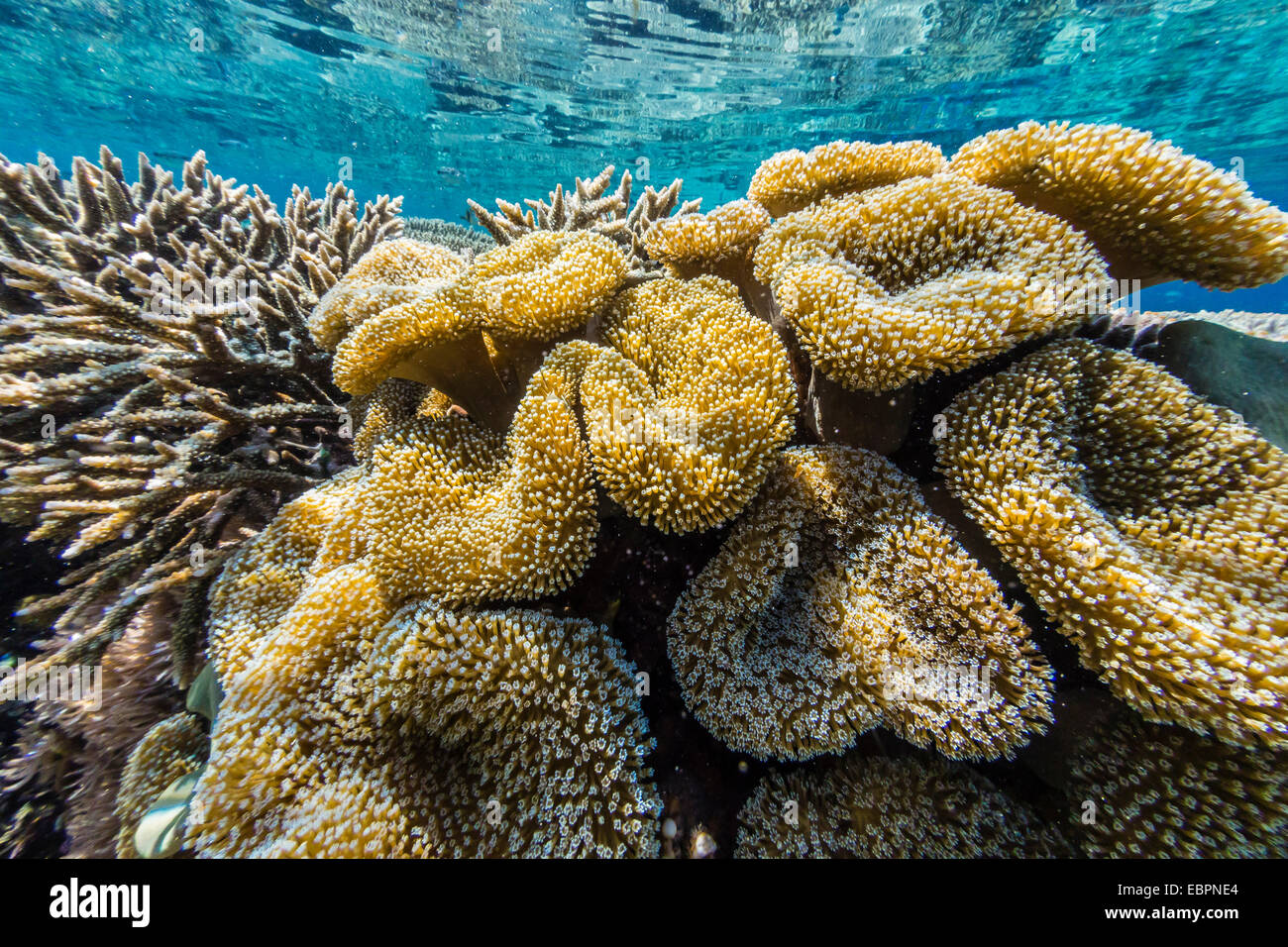 Hard and soft corals and reef fish underwater on sebayur for Hard and soft fishing