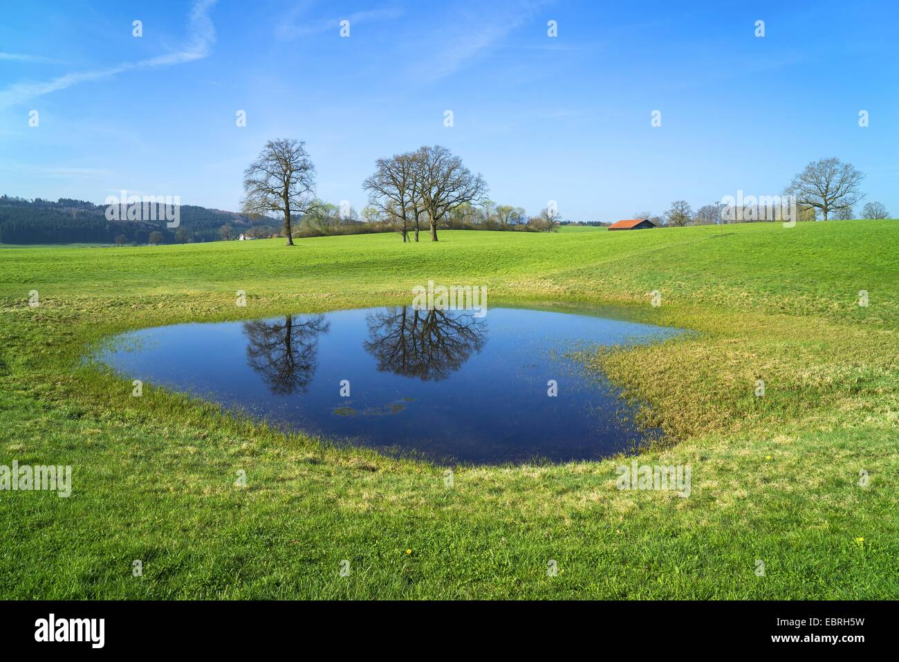 Two trees mirroring in a small pond in a meadow germany for Small pond