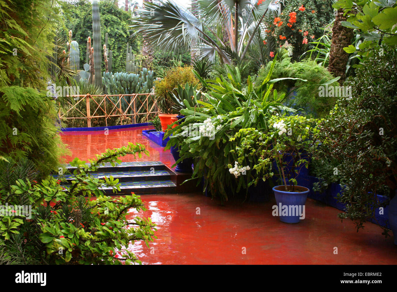 Jardin majorelle botanical garden by yves saint laurent morocco stock photo royalty free - Jardin majorelle yves saint laurent ...
