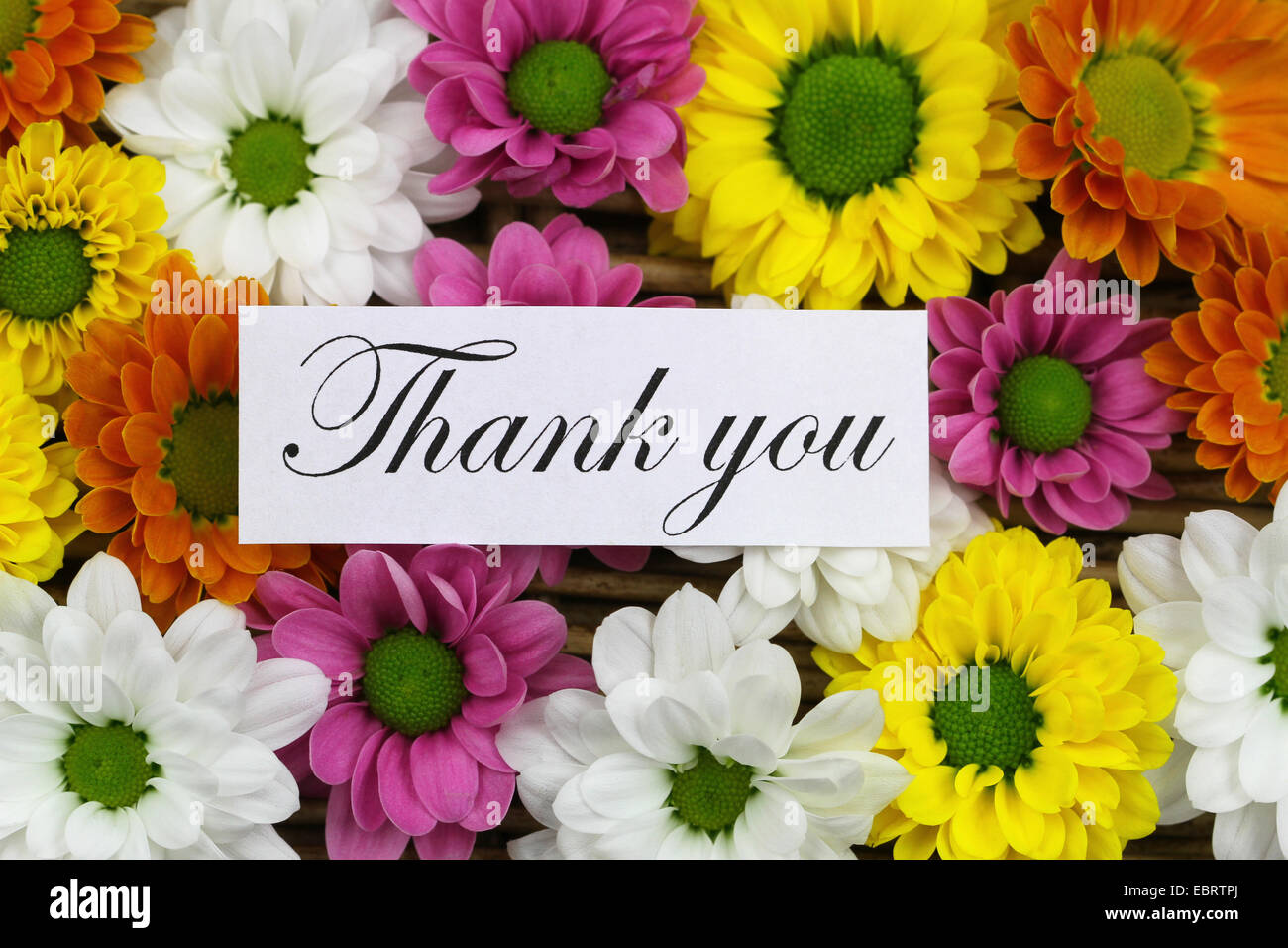 Thank you card with colorful santini flowers stock photo