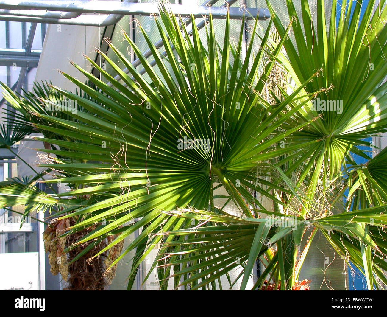 Palm House Plant Id on tropical plant id, house plant bugs identification, house plant name, house plant identification guide, house plant identification by flower, house plant wall, house plant identification by leaf, aquarium plant id, house plant propagation, house plant pests,