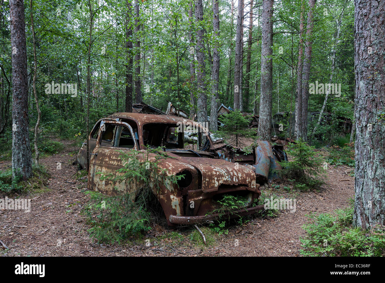 Junkyard in the forest, junk car, 40s, at Ryd, Småland, Sweden ...