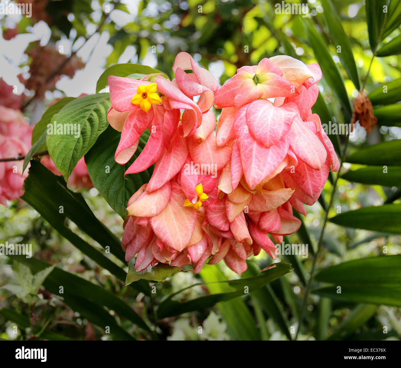 Photo pink beautiful tropical flowers and leaves during the day photo pink beautiful tropical flowers and leaves during the day izmirmasajfo