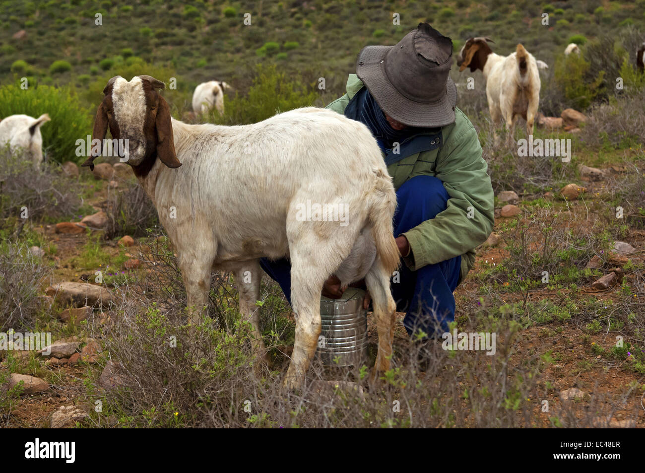 how to become a goat herder