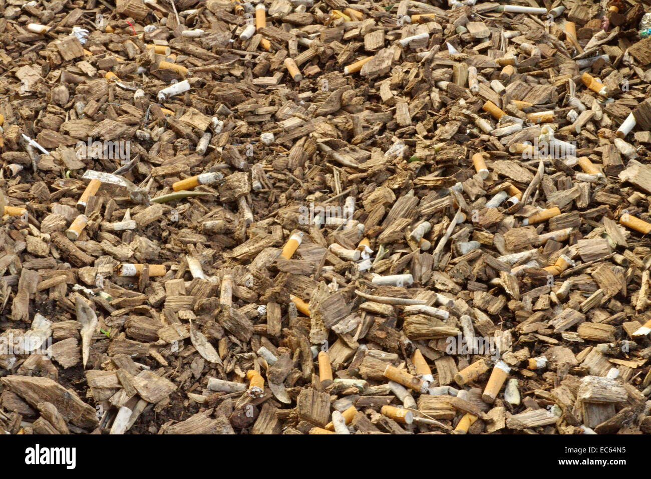 Dirty Wood Chips ~ Many cigarette butts among lots of wood chip stock photo