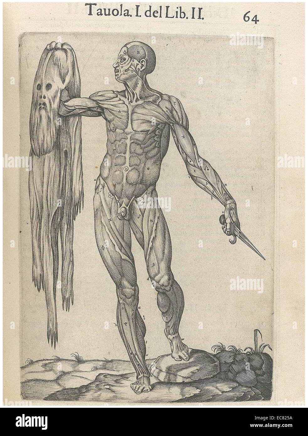 "print from ""history of the composition of the human body stock, Muscles"