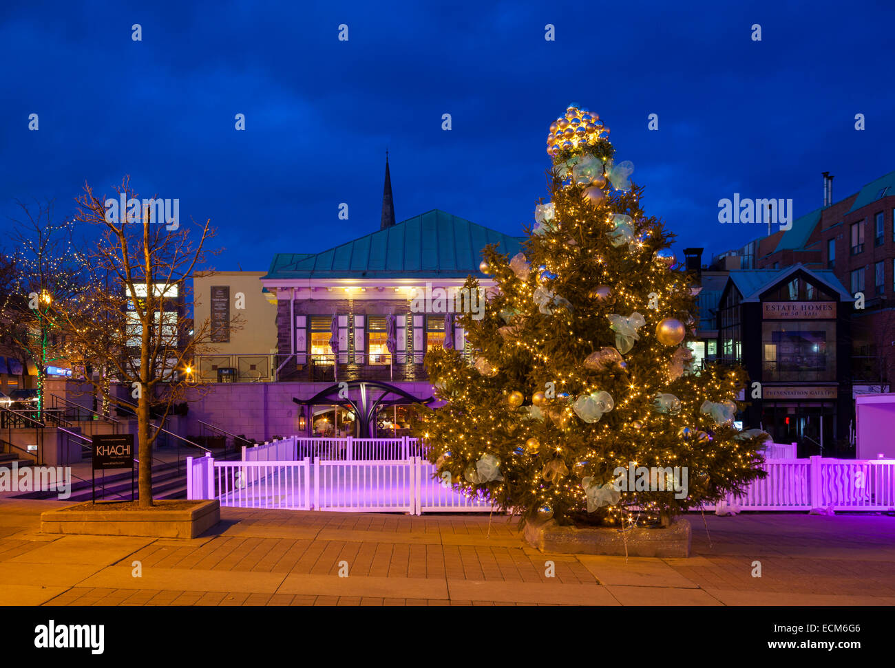 A Christmas Tree In Oakville's Towne Square At Dusk