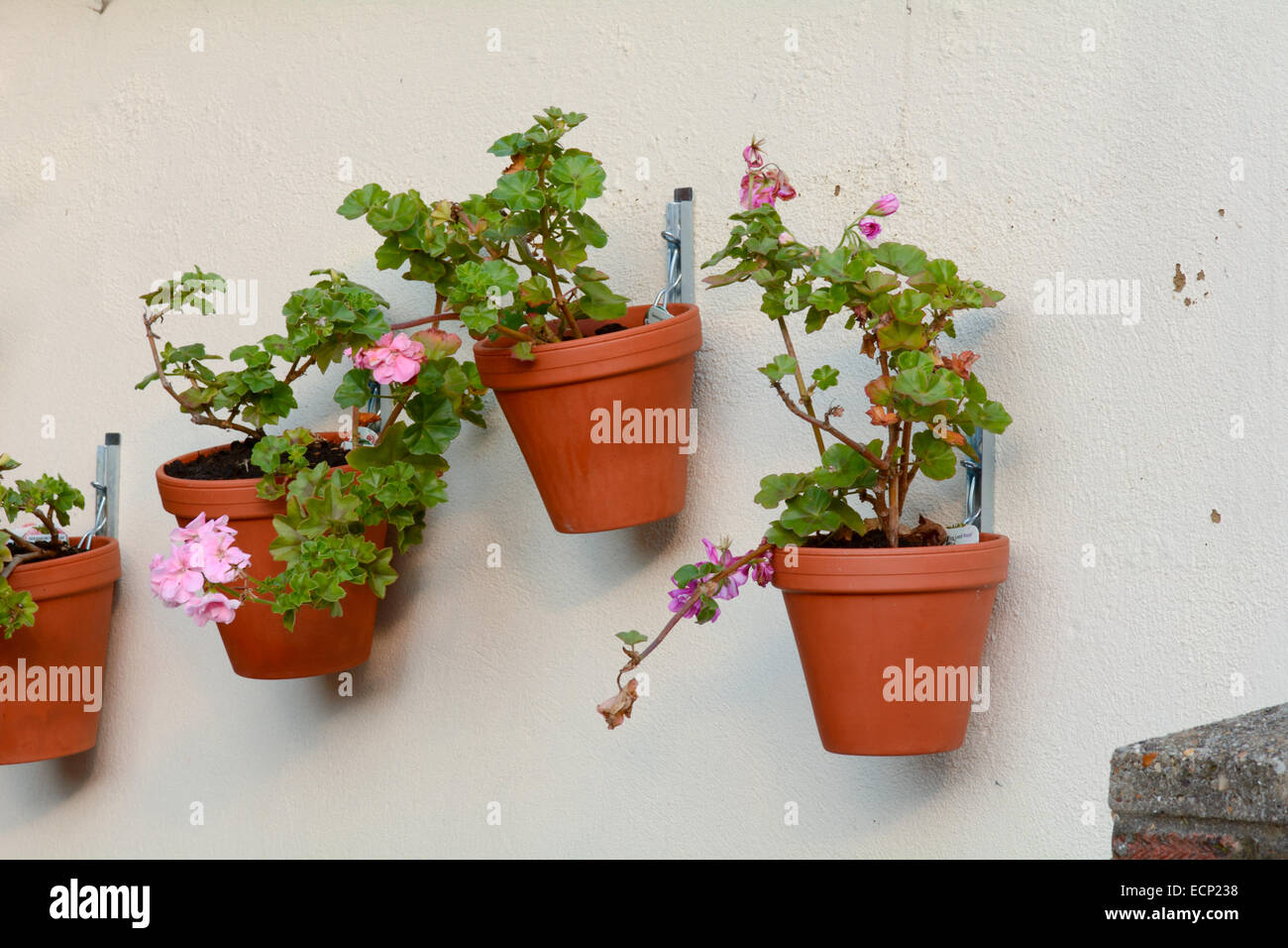 Flower pots hanging on garden wall stock photo royalty for Fence hanging flower pots