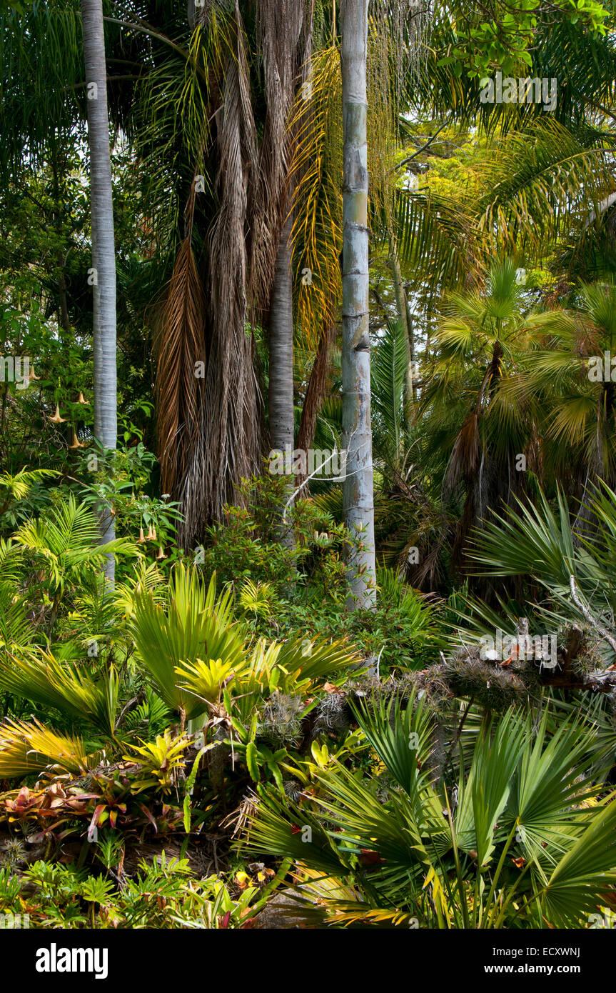 Tropical Rain Forest Garden, San Diego Botanic Garden, Encinitas, California