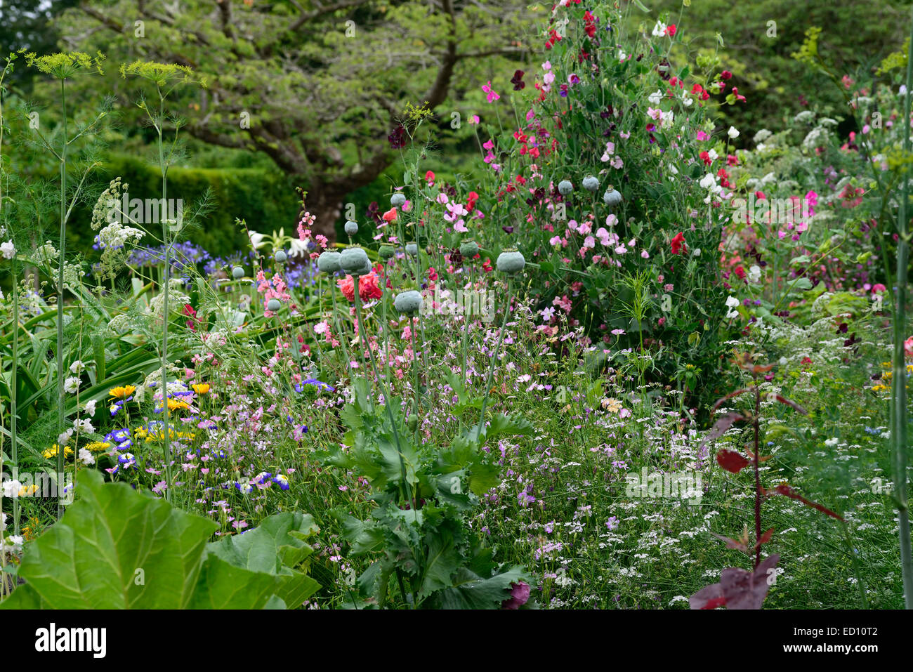 Wildflowers poppies sweet peas wildlife friendly planting for Planting schemes for small gardens
