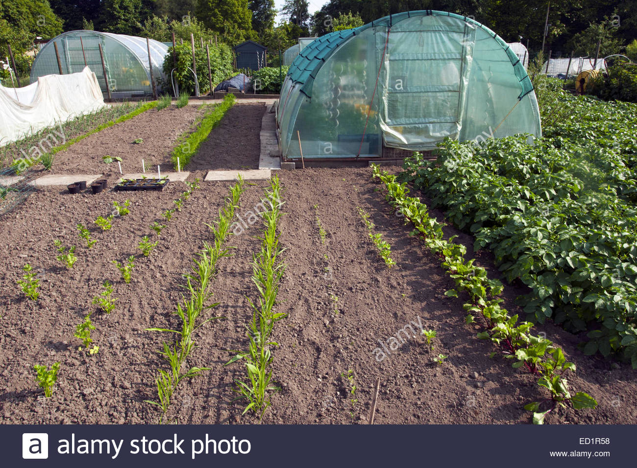 Kitchen Garden Vegetables Plastic Greenhouse And Herbs And Vegetables Growing In Kitchen