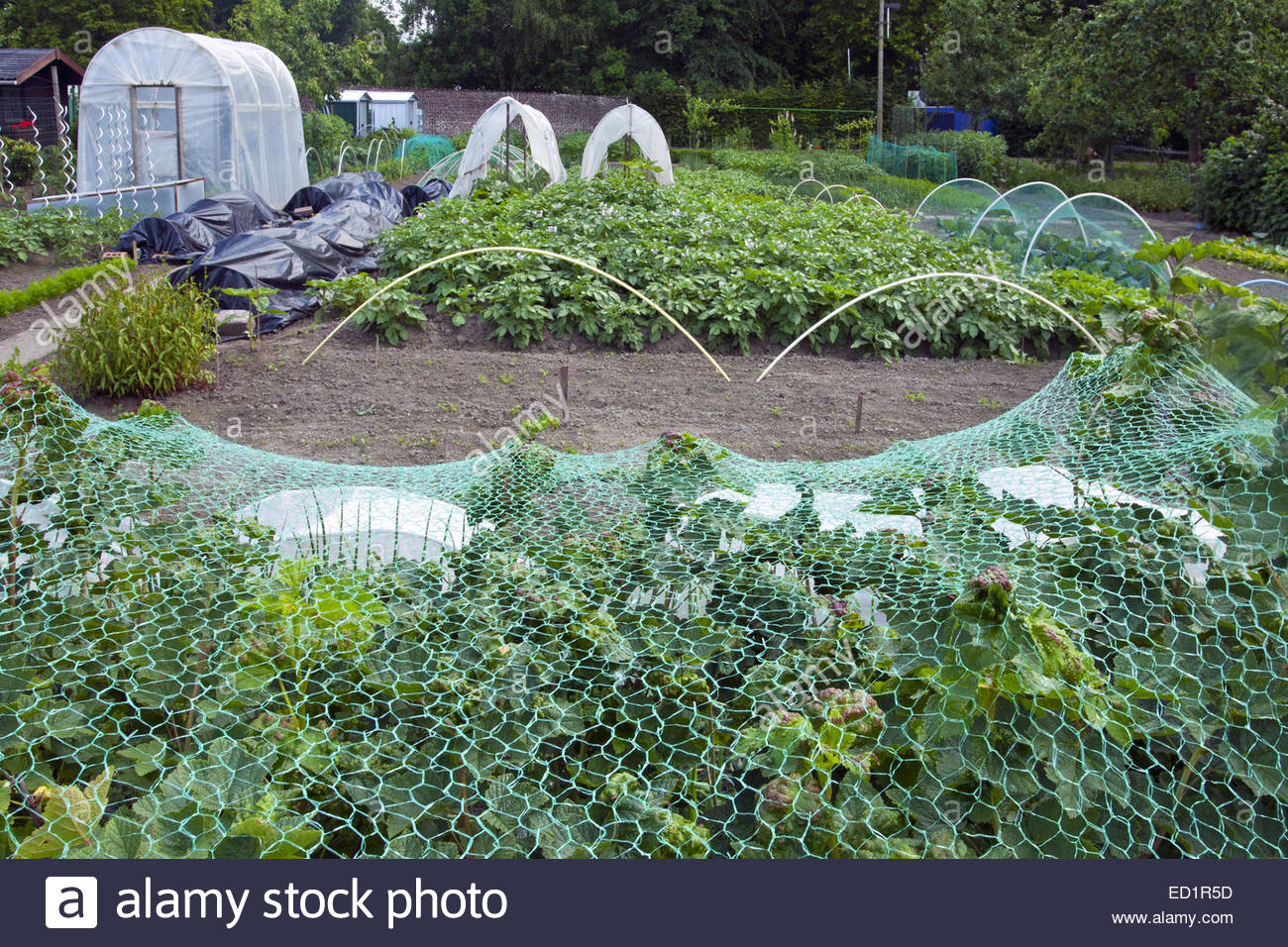 Kitchen Vegetable Garden Plastic Greenhouse And Tunnels And Vegetables Growing In Kitchen