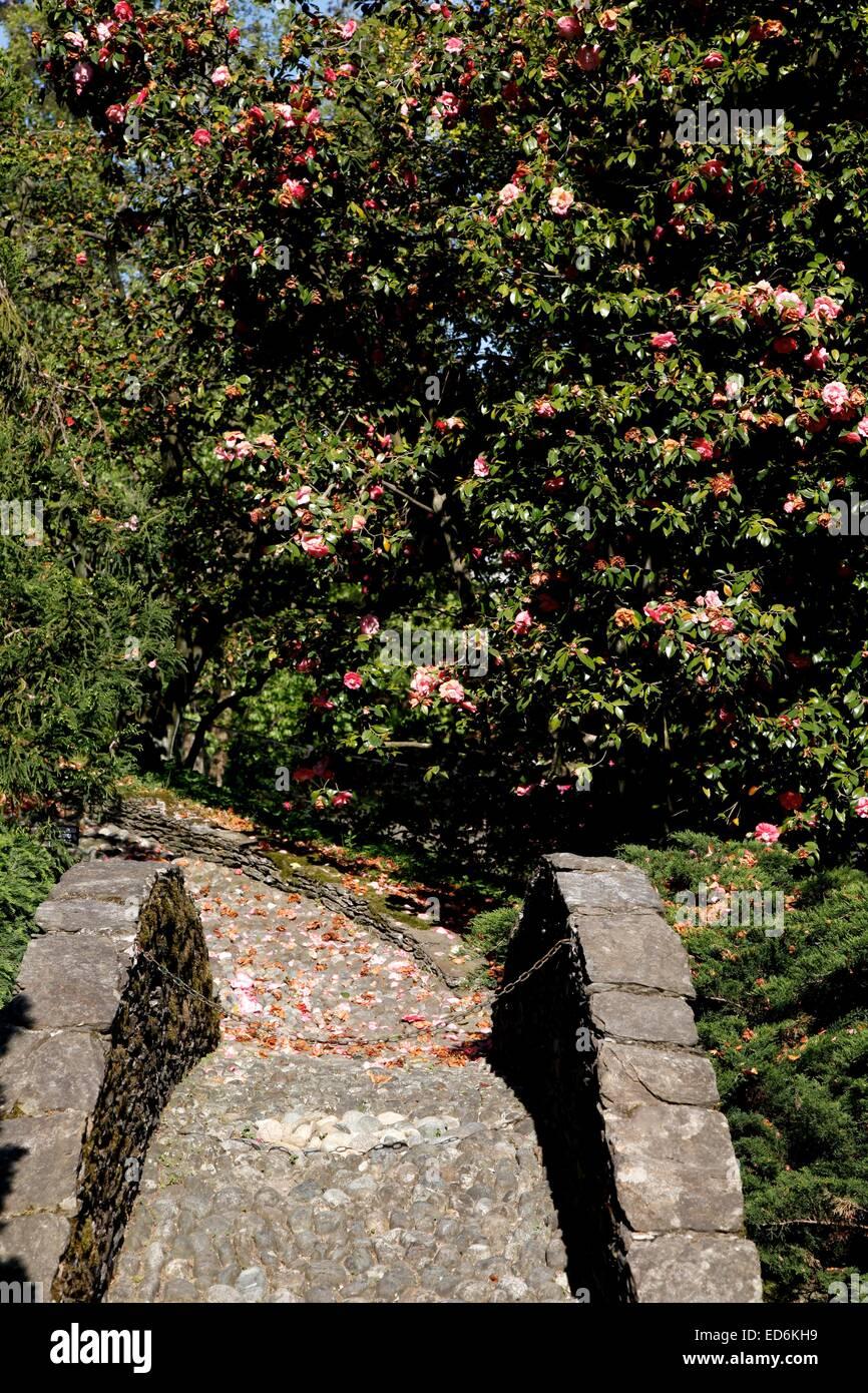 A Stone Bridge In Villa Taranto Botanica Garden