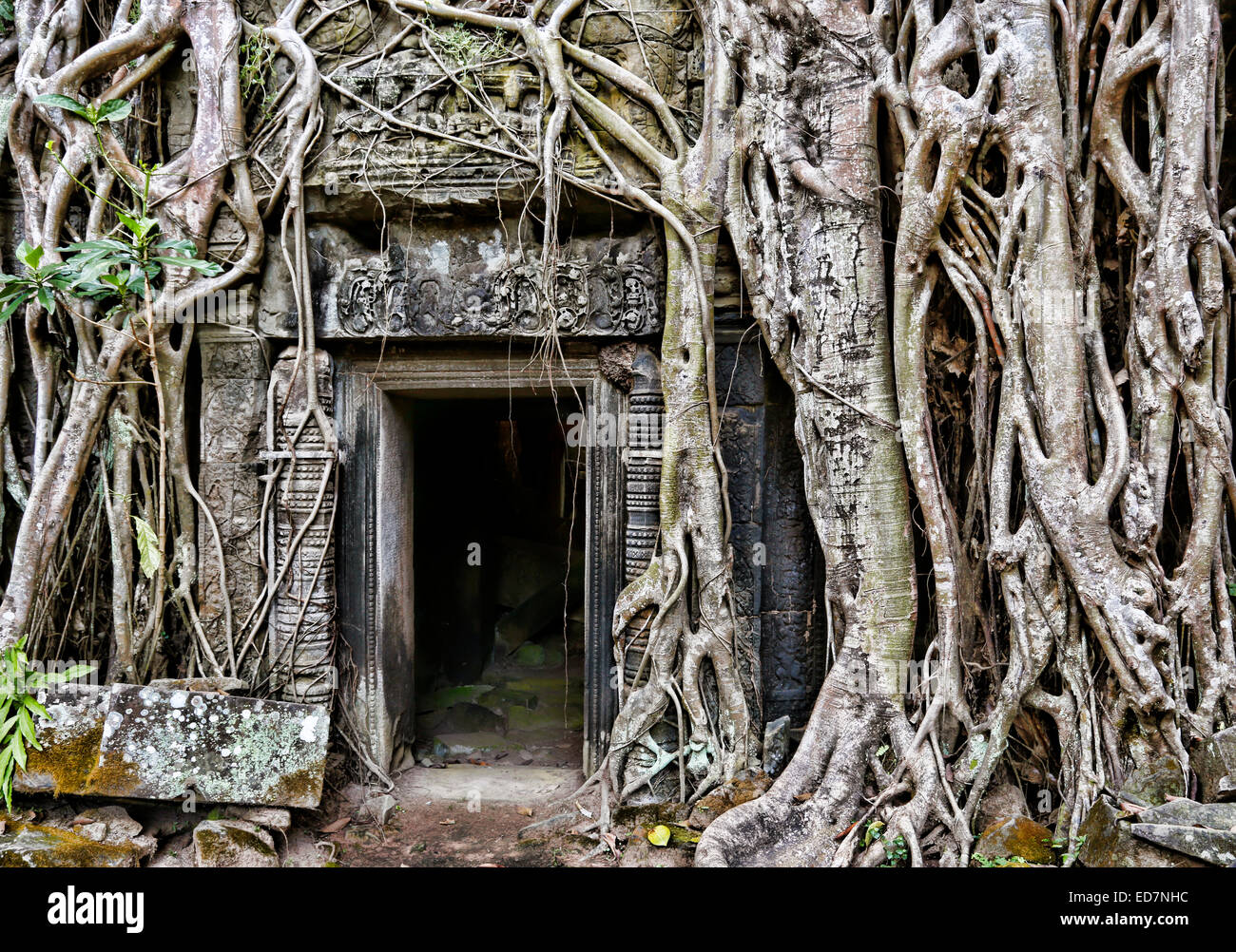 Doorway At Ta Prohm Temple Overgrown With Strangler Fig Tree Roots ...