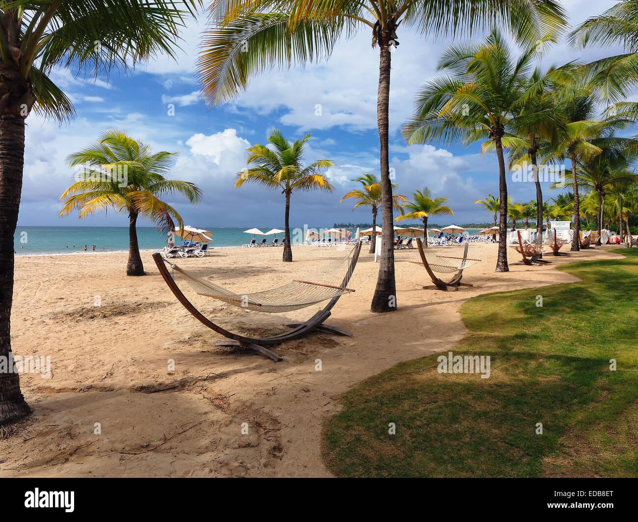 palm trees and hammocks carolina beach isla verde puerto rico palm trees and hammocks carolina beach isla verde puerto rico      rh   alamy