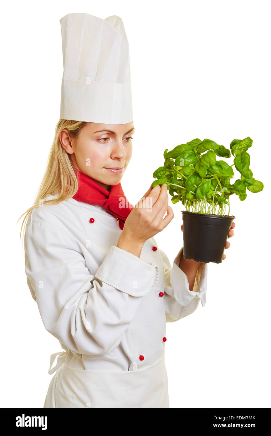 Chefs buying fresh herbs - Female Chef Cook Checking Fresh Pot Of Basil Herbs For Quality And Taste