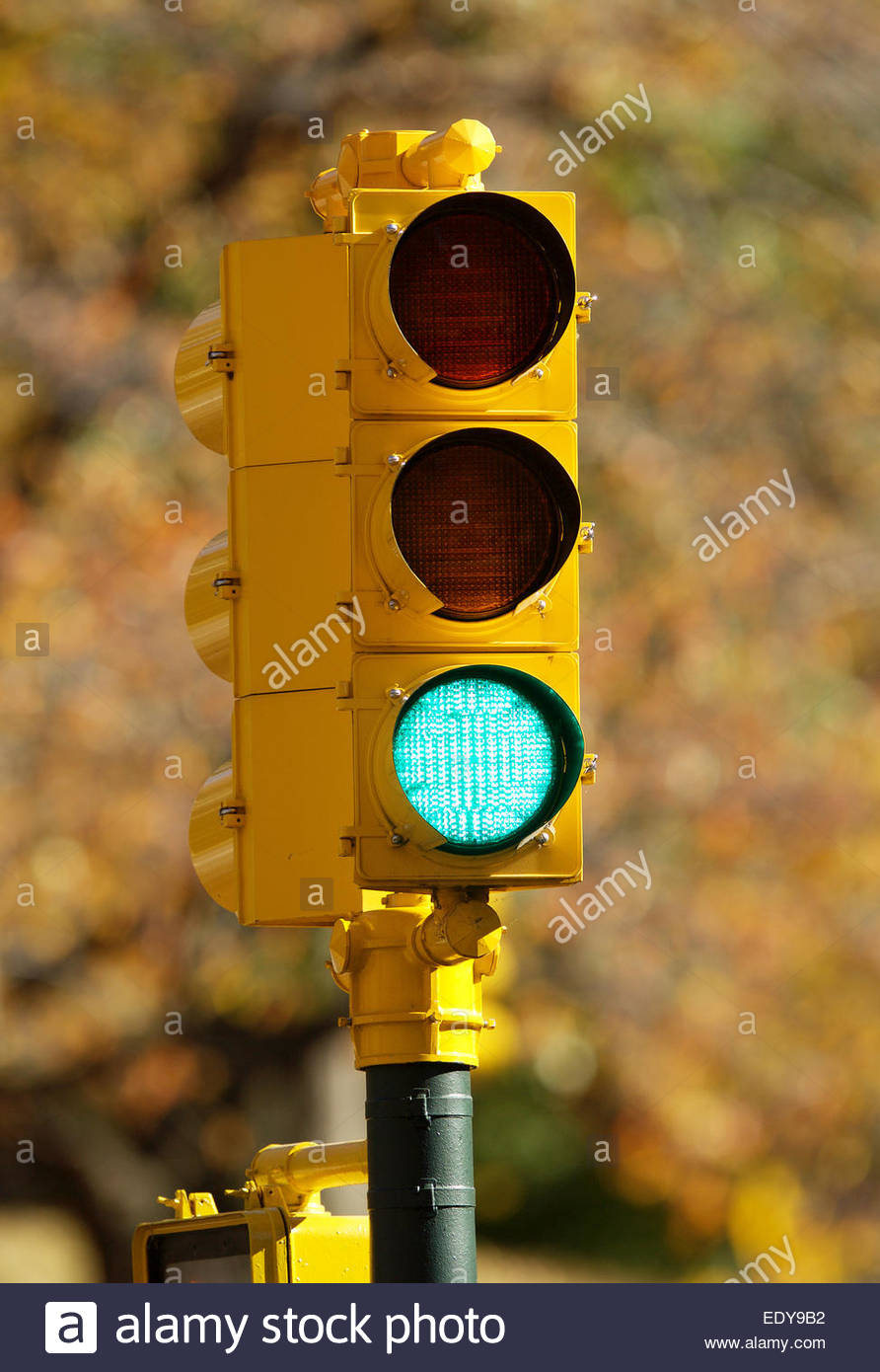 New Light Of Myanmar Daily Journal: A Yelllow New York Traffic Light In Central Park, New York