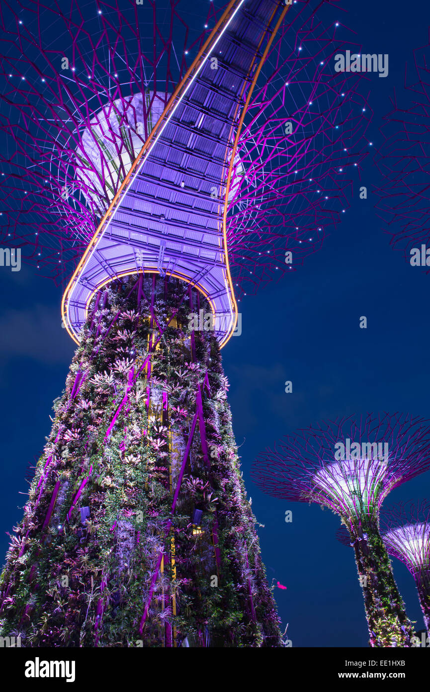 Garden By The Bay Night gardensthe bay at night, singapore, southeast asia, asia stock