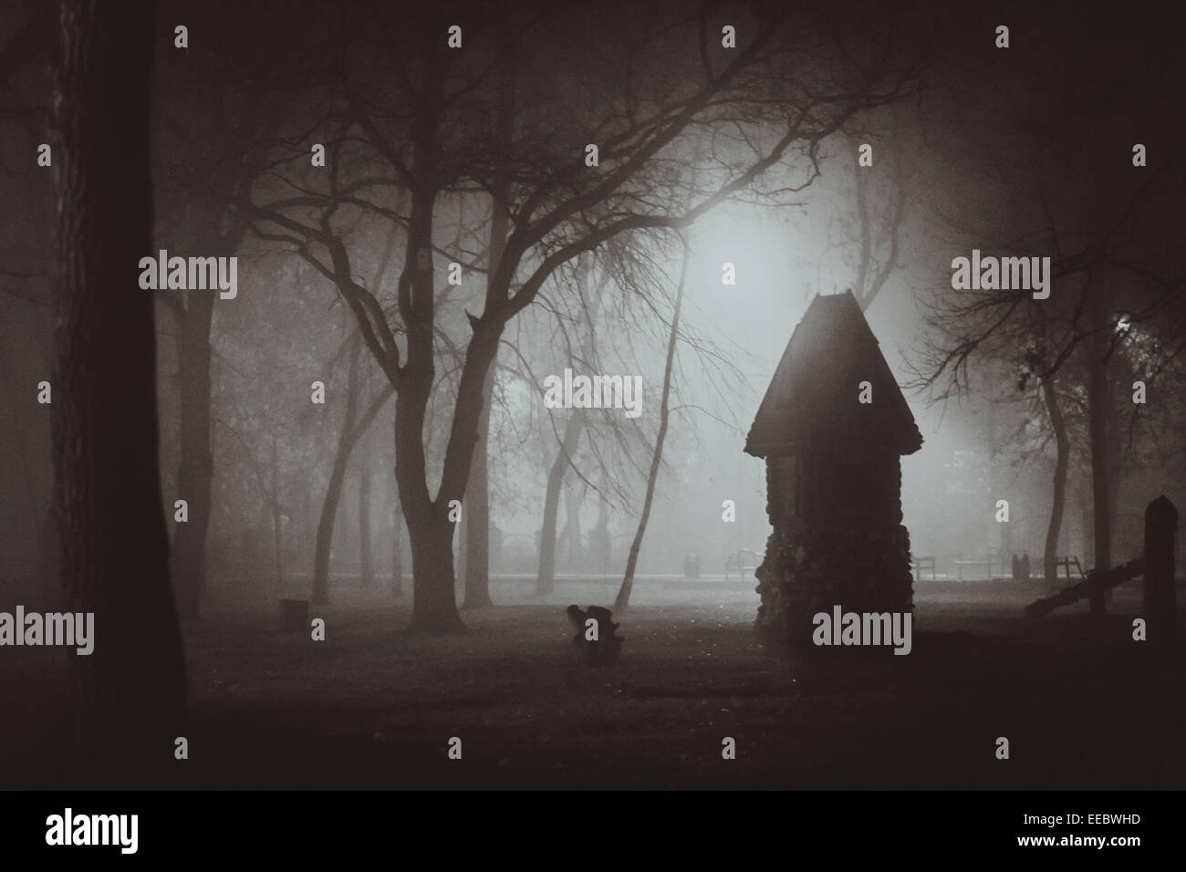 horror lighting. Horror Scene Of A Autumn Fog. LIGHTING FILM NOIR STYLE Lighting S