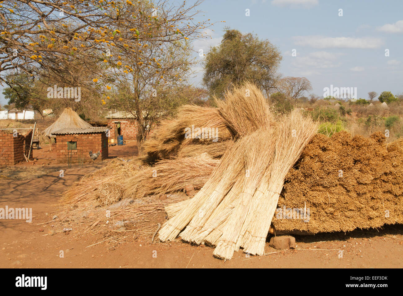 Pile Of Bundles Of Thatching Grass To Make A Thatched Roof At The Chiawa  Cultural Village On The Zambezi River In Zambia, Africa