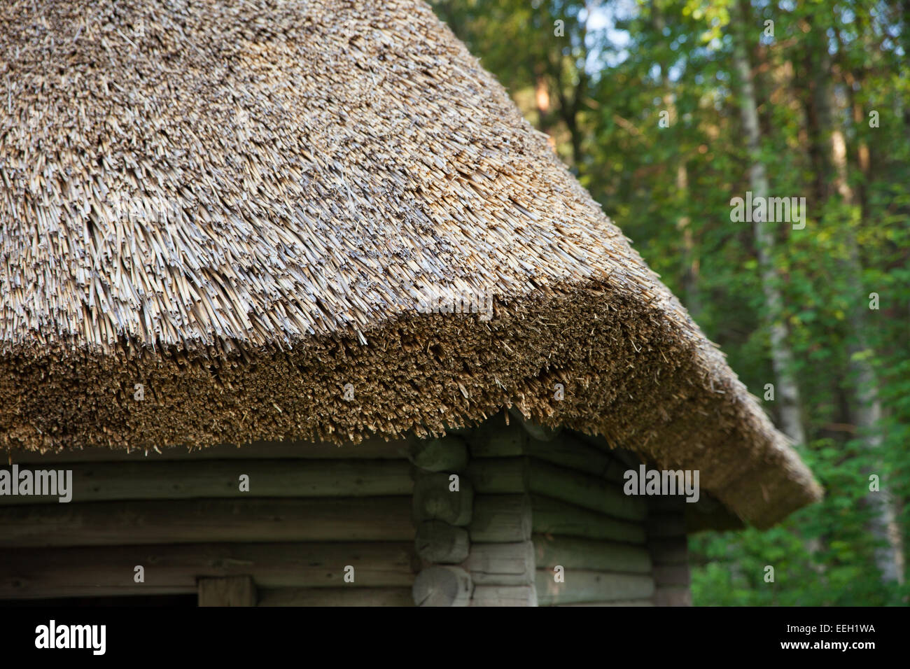 palm thatch roof instructions