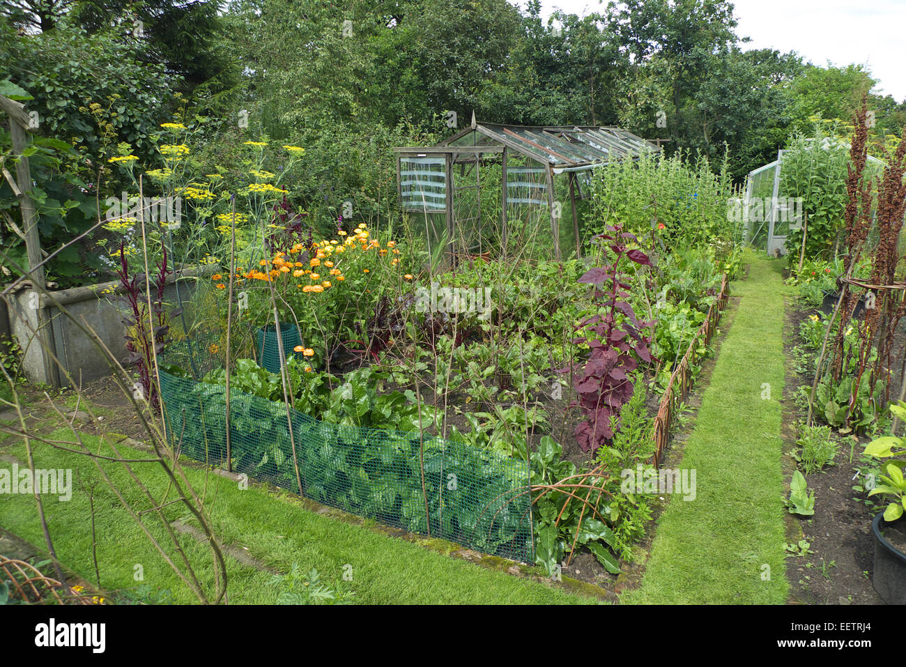 Organic Kitchen Garden Ornamental Organic Kitchen Garden Cheshire Uk Stock Photo