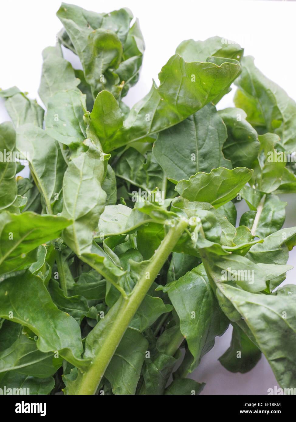 Eruca Sativa Aka Salad Rocket Rucola Rucoli Rugula Colewort Roquette